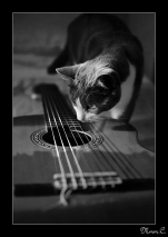 Kanjis guitare cadre noir
