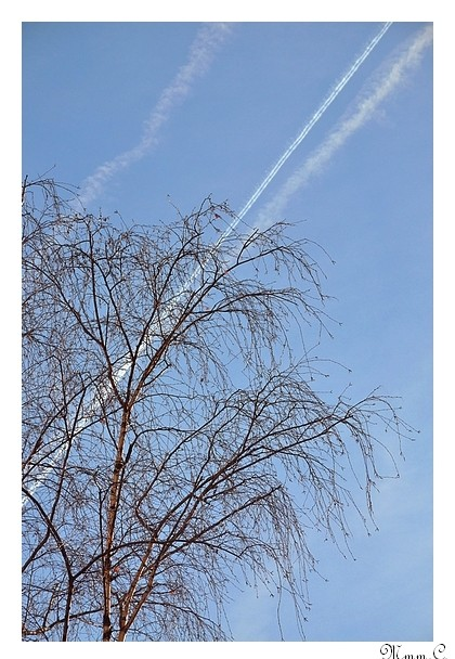 arbre parisien PF
