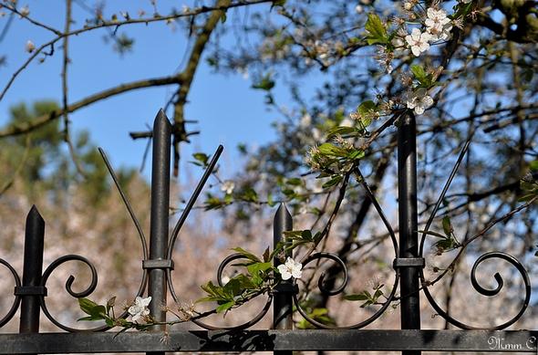 barrière fleurs 1 TpF