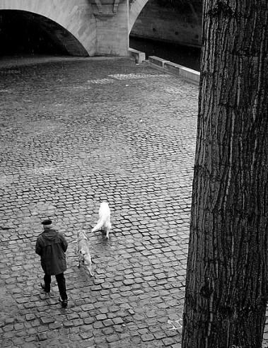 promeneur et ses chiens