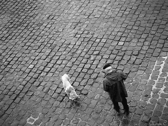Le promeneur et son chien