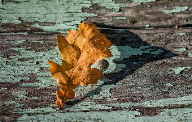 feuille-d-automne-fall
